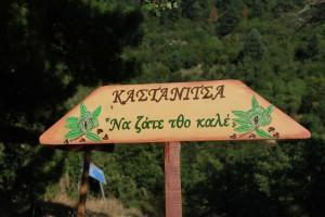 kastanitsa_74