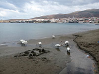 andros_42